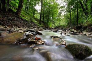 berg flod i skogen foto