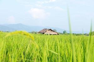 risfält med stuga foto