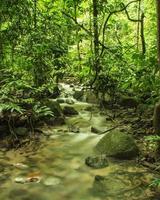 lugn ström i tropisk regnskog