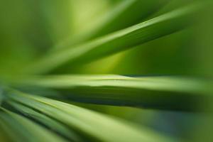 abstrakt tropisk natur: exotiskt makro av grönt palmblad
