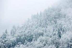 vackert vinterlandskap med snötäckta träd foto