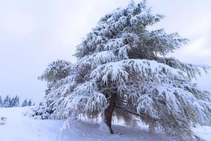 granar täckta av snö
