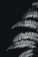 silver ormbunkeblad i svart och vitt