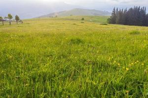 berg betesmark tidigt på morgonen foto