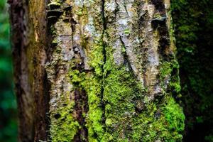grön mos på trädet foto