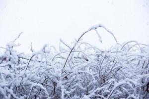 snö, snöbild, täckt med snö i Japan foto
