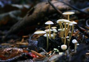 små svampar paddestolar foto