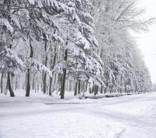 snötäckta träd i stadsparken