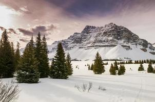 vinter i banff nationalpark foto
