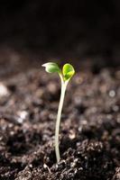 grön planta som illustrerar begreppet nytt liv foto