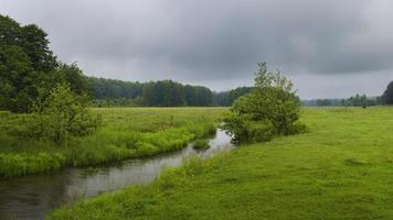 grön äng foto