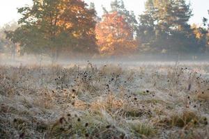 höstfält i rimfrost foto