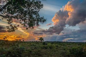 amazonian savann peruansk djungel madre de dios foto