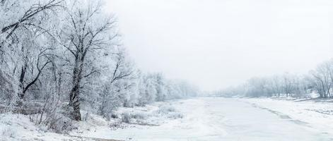 vinter vackert landskap med träd täckt med rimfrost foto