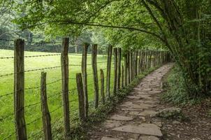 campo y verde en navarra