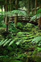 bro och grön mossmiljö foto