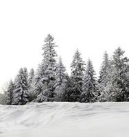 grupp av träd foto