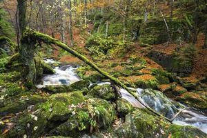 floden Steinbachklamm i Bayern foto