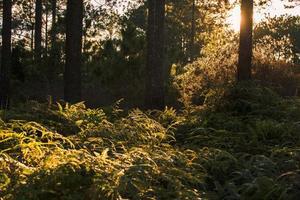 solstrålarna bryter igenom höstlöven foto