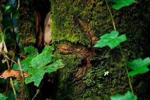 yta av gammalt träd foto
