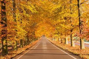 hösten i Nederländerna foto