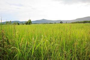 landsbygd med berg foto