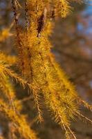 träd på hösten
