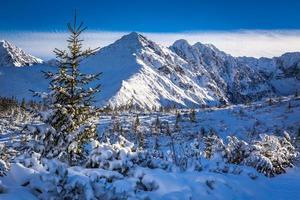 solig dag på bergspåret foto