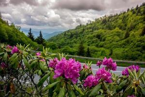 rhododendron i den stora rökiga bergen nationalpark foto