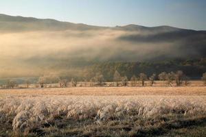 frost och dimma