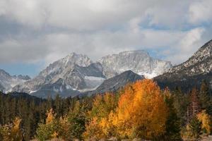 rock creek aspens på hösten foto