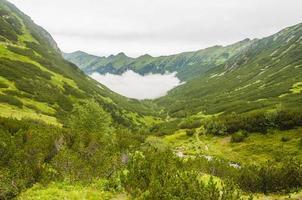 dal - dolina cicha liptowska (dolina cicha, tichá dolina) foto