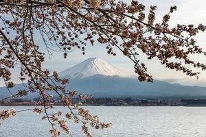 härligt montera fuji och körsbärsblommor på våren, japan foto
