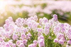 vackra små violetta blommor foto