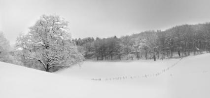 vackra vinterlandskap panorama, snö, träd foto