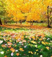 vacker färgrik höst parkerar i solig dag