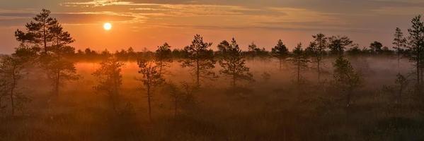 soluppgång i myren. foto