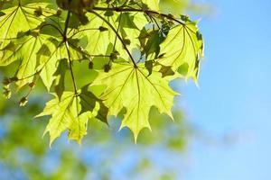 gröna blad bakgrund