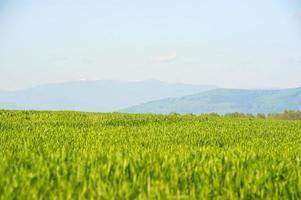 morgonlandskap av grönt gräs i bergen