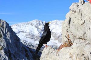 svart fågel i berget foto
