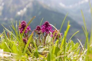 vackra blommor i bergen foto
