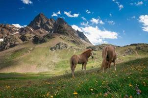 vilda hästar i bergen