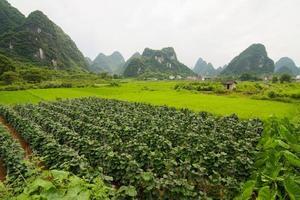jordbruk och vackra karstberg foto