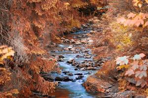 berg flod i skogen. foto