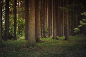 bruna träd under dagtid foto