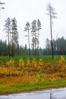 skogsträd i höstfärger på landsbygden