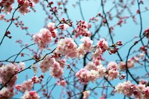 blommande vårträdgren foto