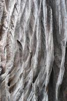 textur och bakgrund av träförfall foto
