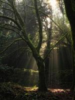 stråle av ljus foto