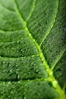 grönt blad med dagg foto